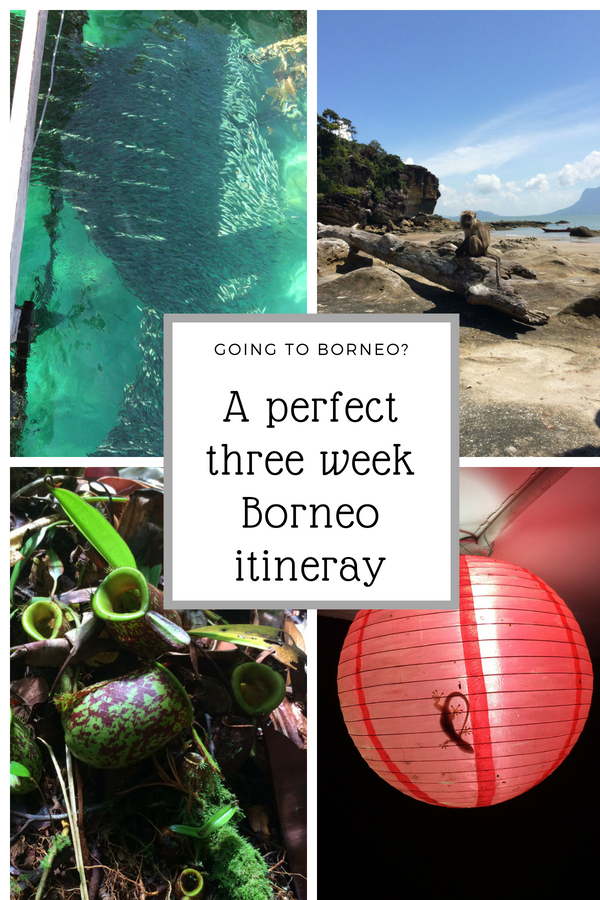 Make the most of three weeks in Borneo. Get a full three week Borneo itinerary with information about hiking in Bako National Park, cave exploring in Mulu National Park, wildlife spotting on Kinabatangan River and much more