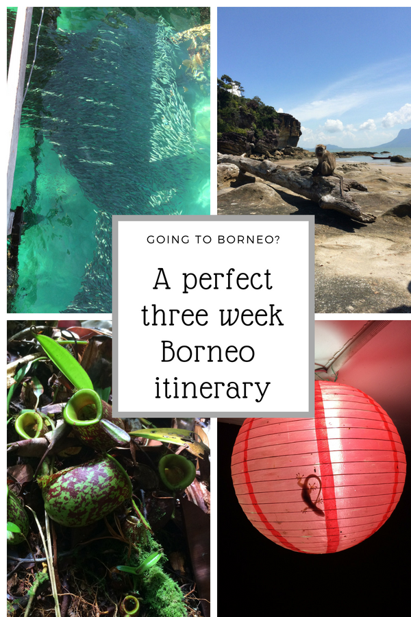 A three week Borneo itinerary for nature lovers. Borneo travel | Borneo what to see | Gunung Mulu | Borneo sights | Borneo must see | Borneo sightseeing | Borneo guide | Borneo pictures |