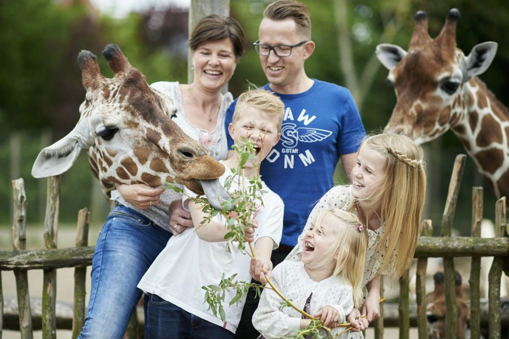 Children feeding the giraffes in Odense Zoo. It is one of many fun kid-friendly activities in Odense, Denmark